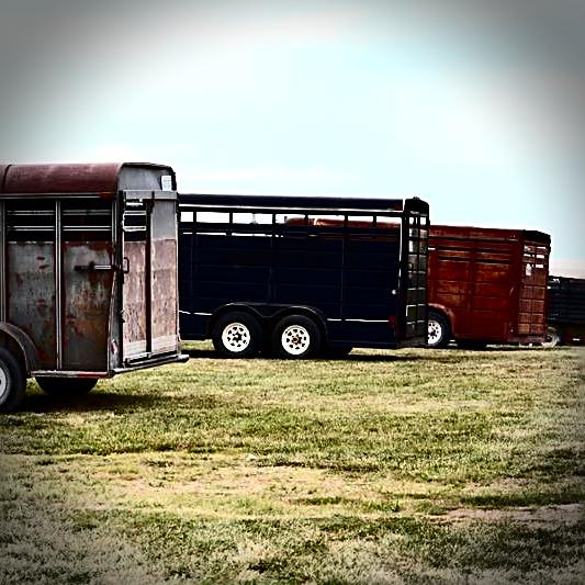 Wheeler Livestock Auction |